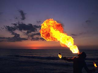 Jamaica fireeater