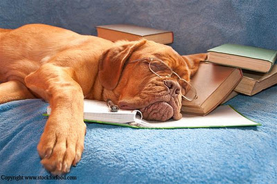 funny-tired-dog-03